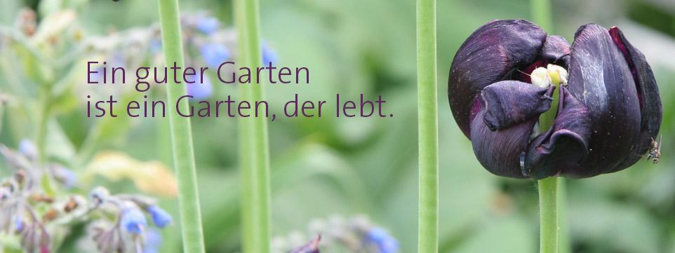 Ein guter Garten ist ein Garten, der lebt.